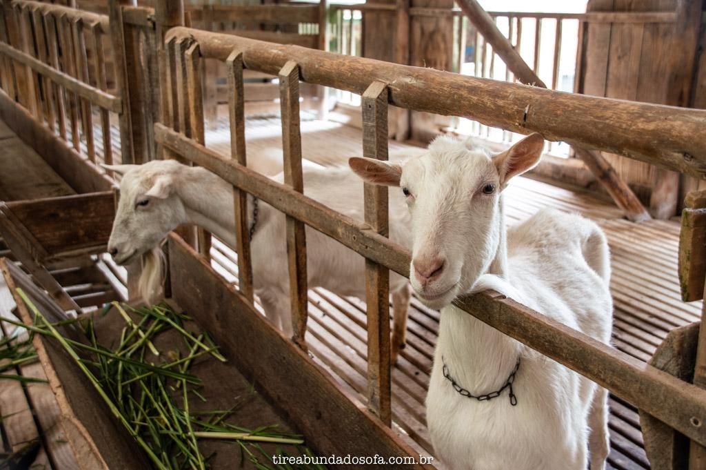 Rancho das Cabras, em campo alegre