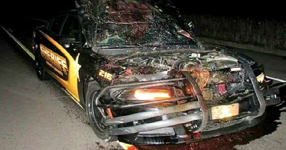 Police Car Hits A Deer At 110 MPH 11