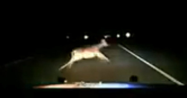 Police Car Hits A Deer At 110 MPH 2