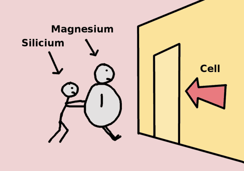 Silicon pushes magnesium into the cell - comic