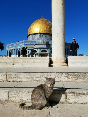 Not the typical shot of the Dome of the Rock on the Temple Mount