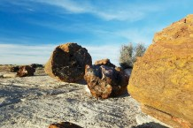 Fossilized logs are scattered everywhere...possibly from the time of Noah's flood or a more recent major flooding event