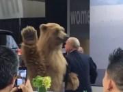 Chrysler Bear