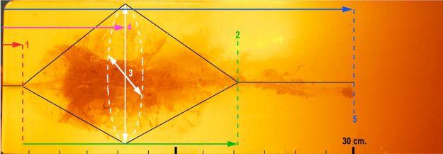 El disparo en gelatina desnuda que se muestra a continuación ilustra el rendimiento terminal ideal.