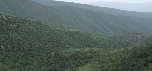 tirumala local sightseeing packages