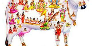 gosamrakshana trust