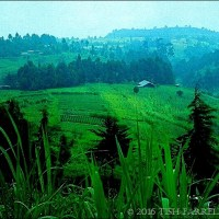 Kenya's Prolific Green Highlands ~ Thursday's Special