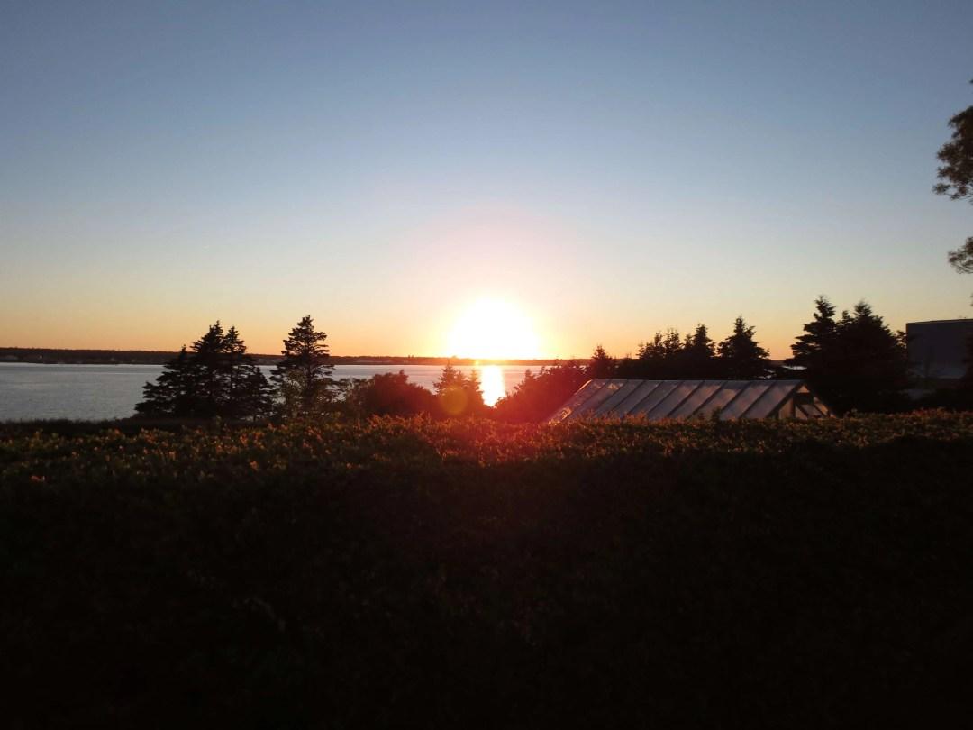 Sunset Teaser from the backyard.