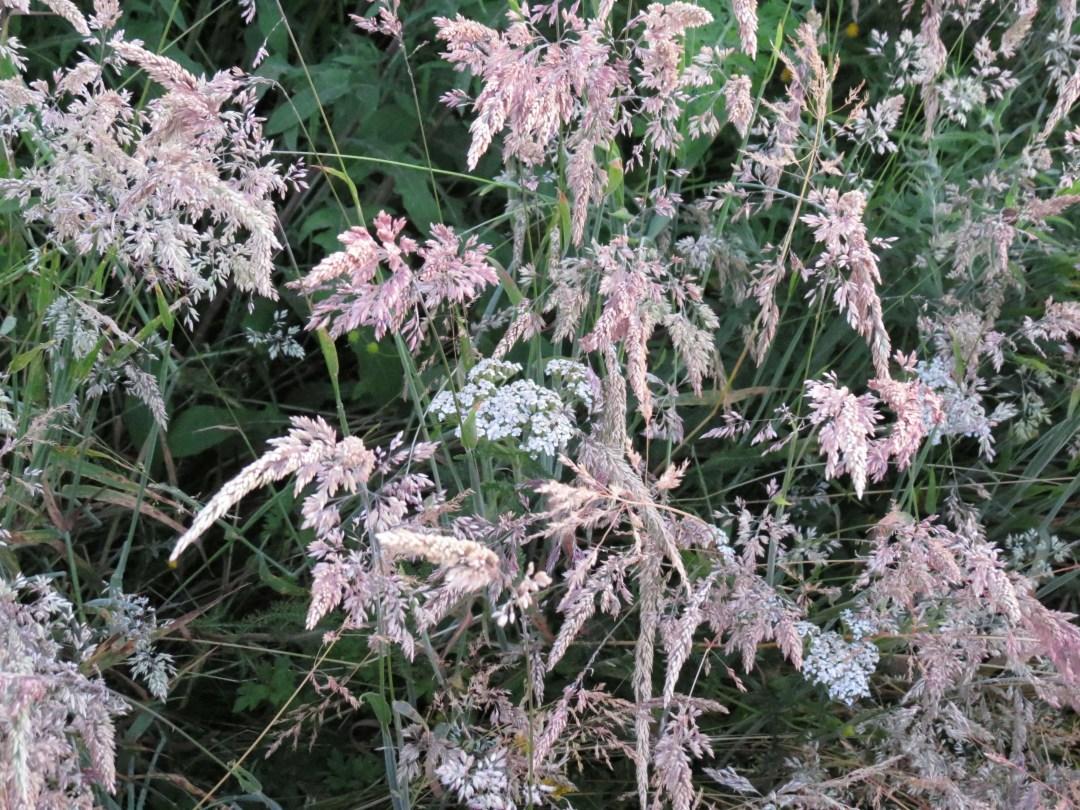 Wildflowers in the backyard in Lower East Pubnico.
