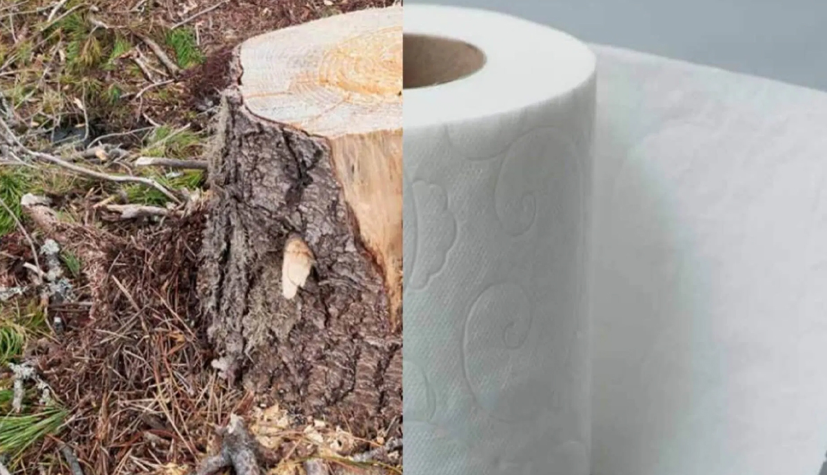 , The future of Alabama's forest products industry