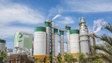 , Eldorado reaches the milestone of 14 million tons of produced pulp