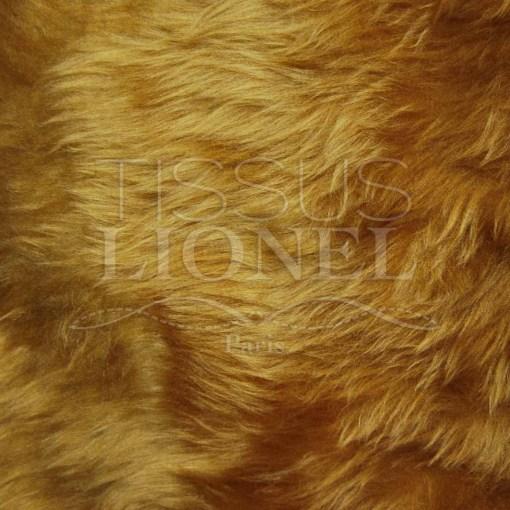 fourrure poil court lion