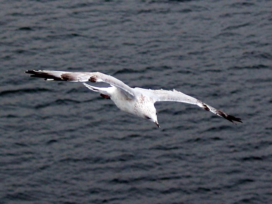 Oslo - 79 gull