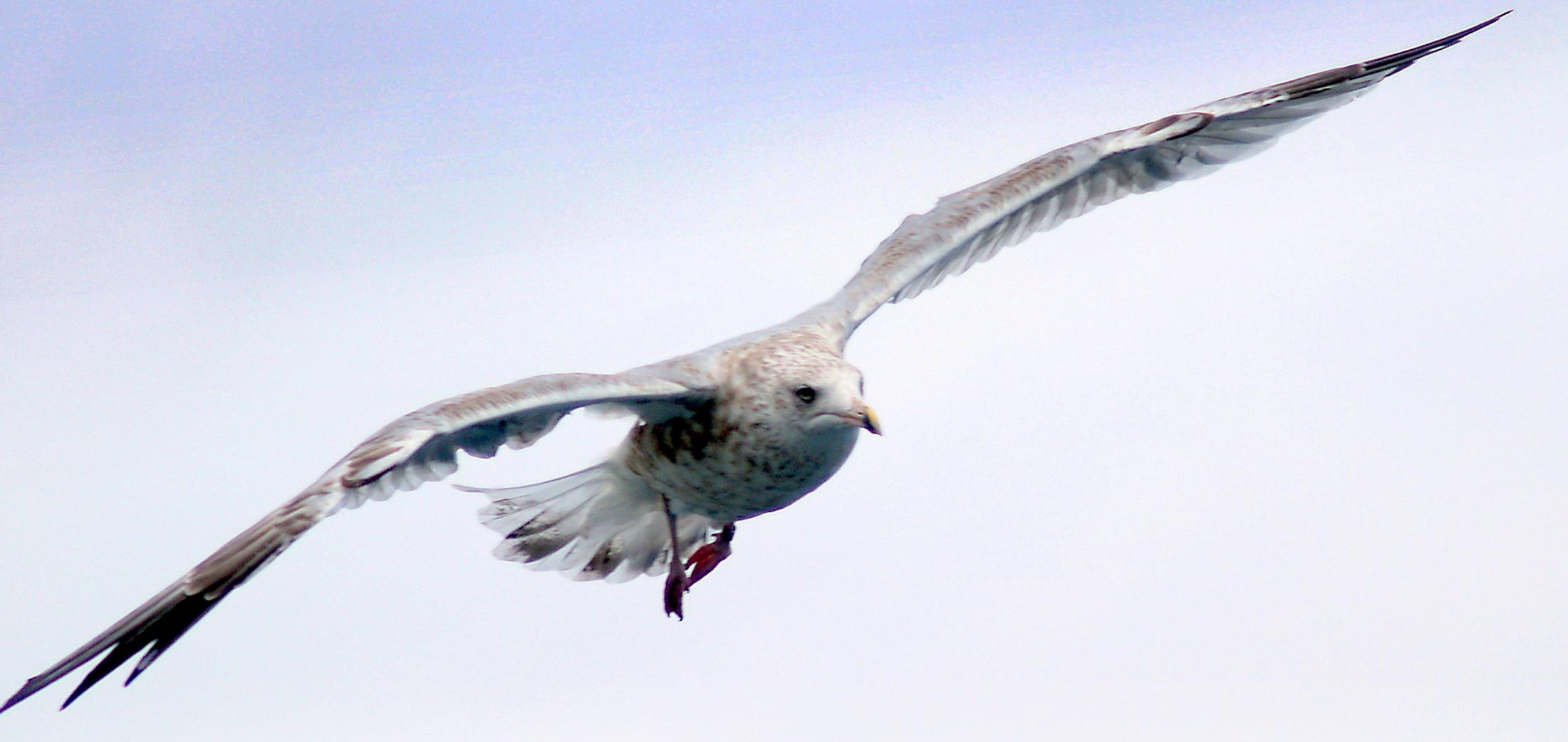 Oslo - 84 gull