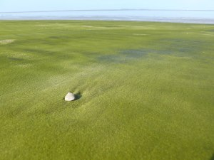 Green Sand In Kourou, French Guiana. Image credits: Arria Belli