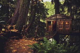 Treehouse in Seattle (USA) As if tree houses are not fairy tale-ish enough by themselves, this one even has a rope bridge leading to its doorstep! (Image credits: jasfitz)