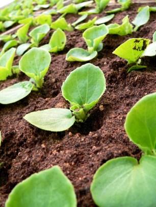 seedling-1369392-1279x1705