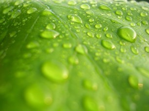 water-on-the-leaf-1409480-1920x1440