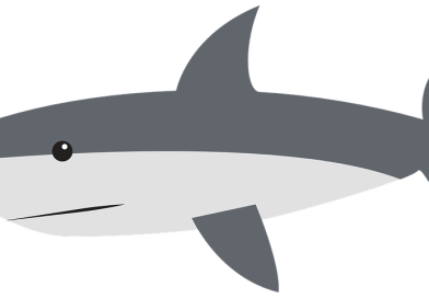 Sharks Steal the Show