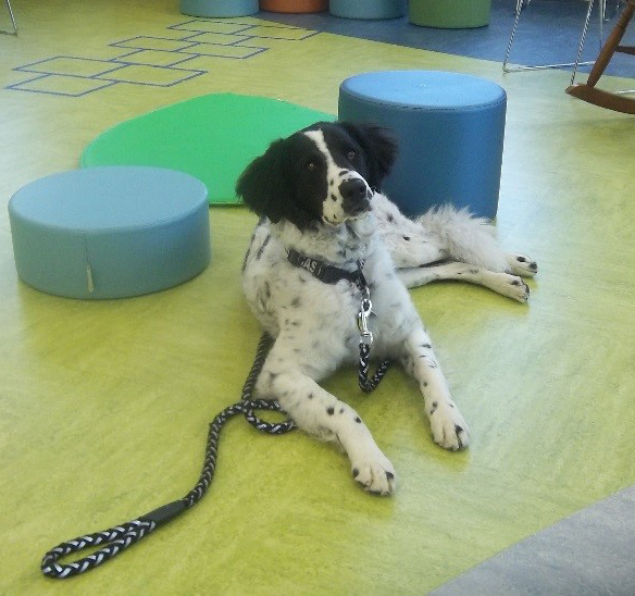 Photo of a white dog with black ears and spots wearing a leash and laying down in the children's room