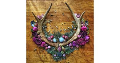 arrangement antlers flowers blue green purple on a wood backdrop