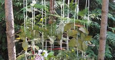 outdoor weaving loom made of wood and string plants connected to the strings