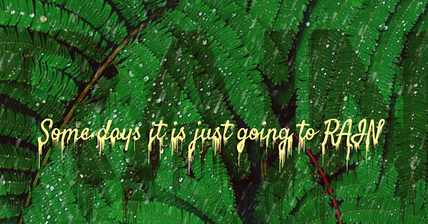 daily inspirational quote image: bright green fern leaves, drenched with rain