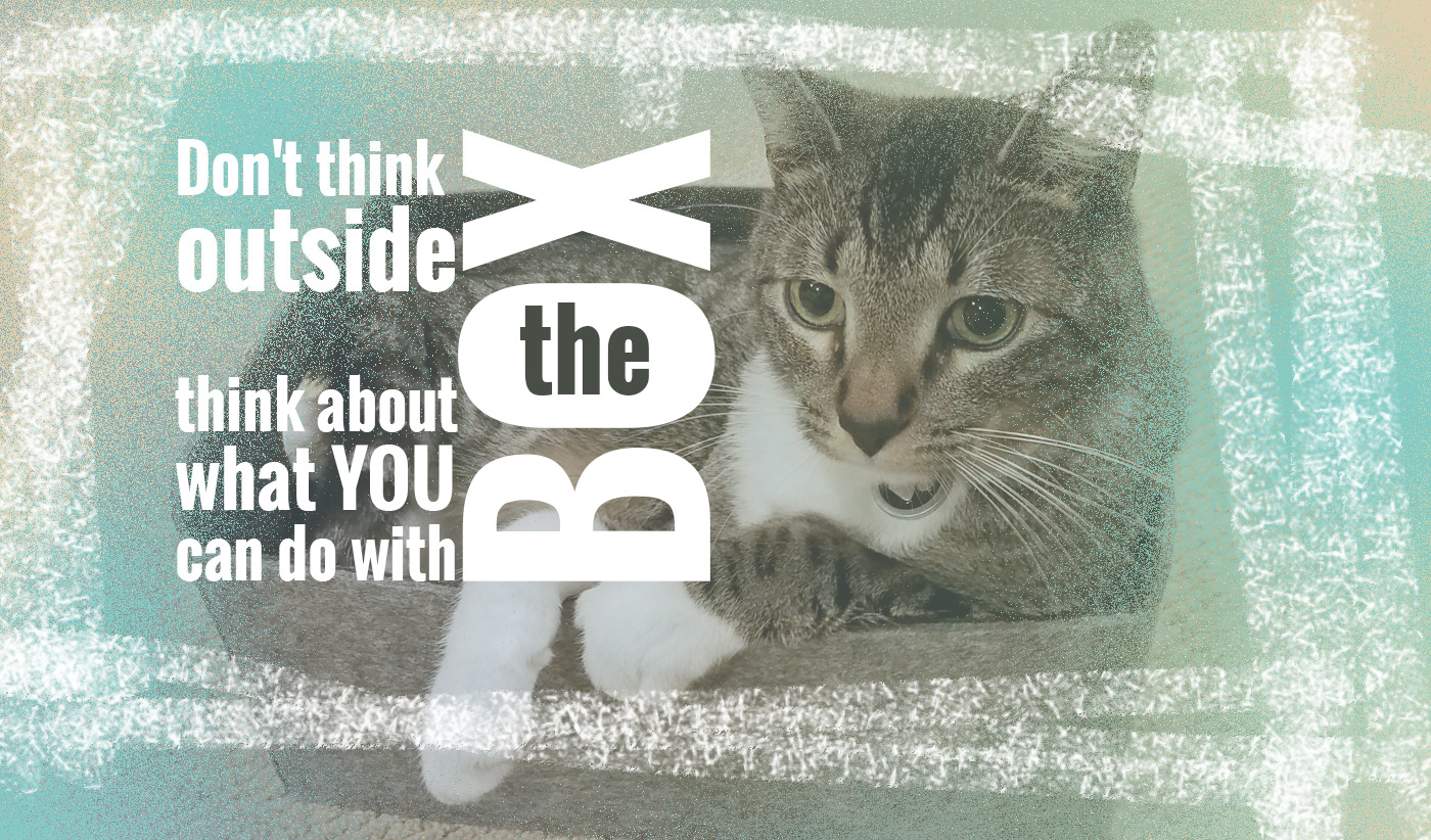 daily inspirational quote image: adorable cat, looking very serious, while sitting in a small felt box