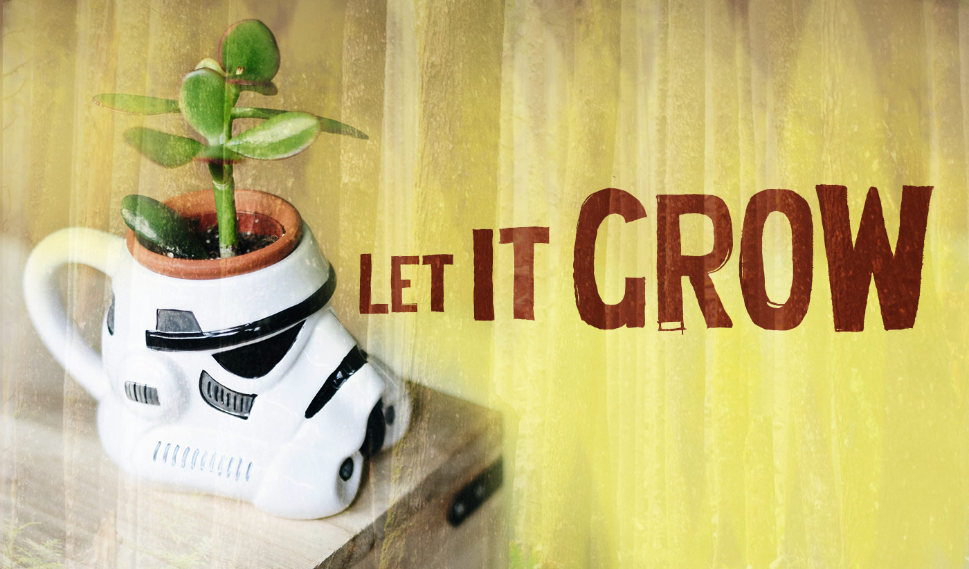 daily inspirational quote image: a jade plant growing in a Storm Trooper planter