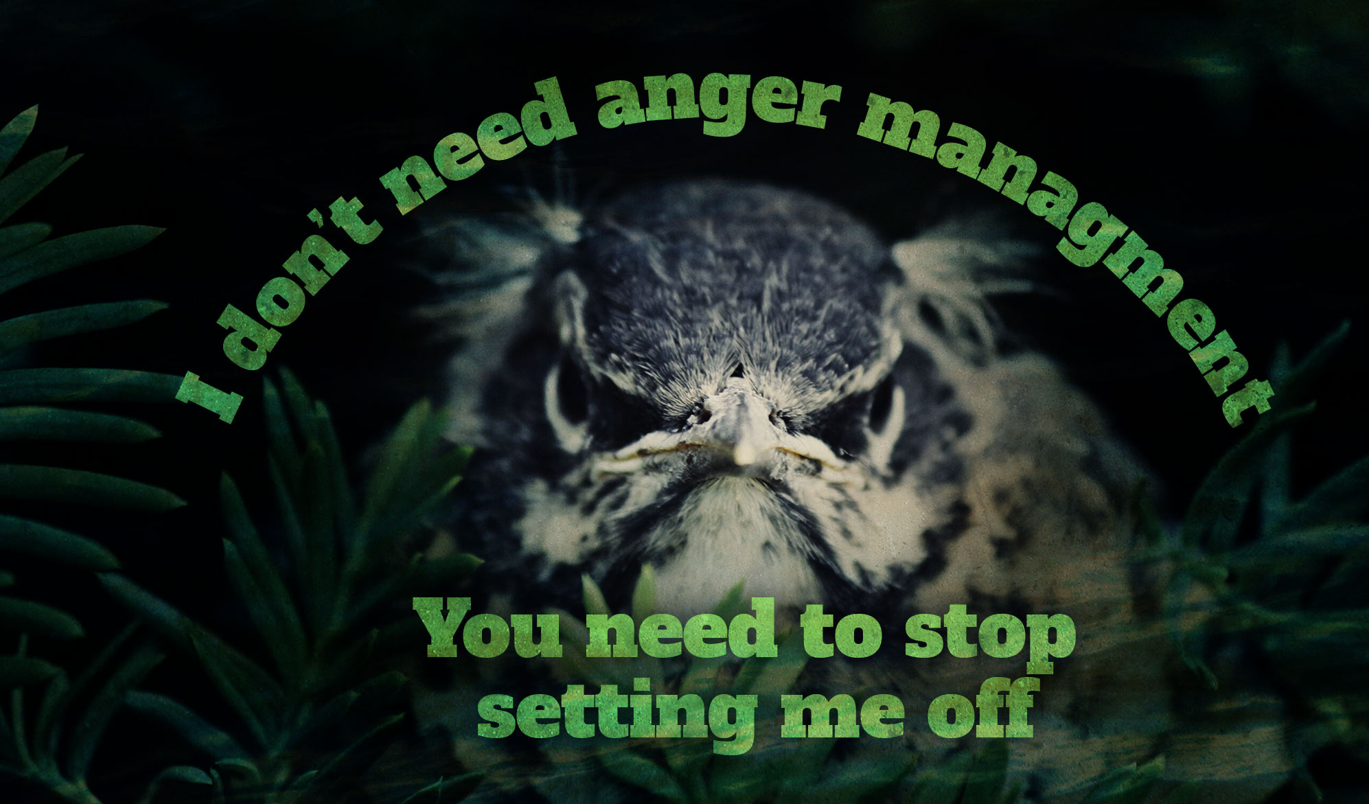 daily inspirational quote image: close up on a angry looking owl, in in a dark forest