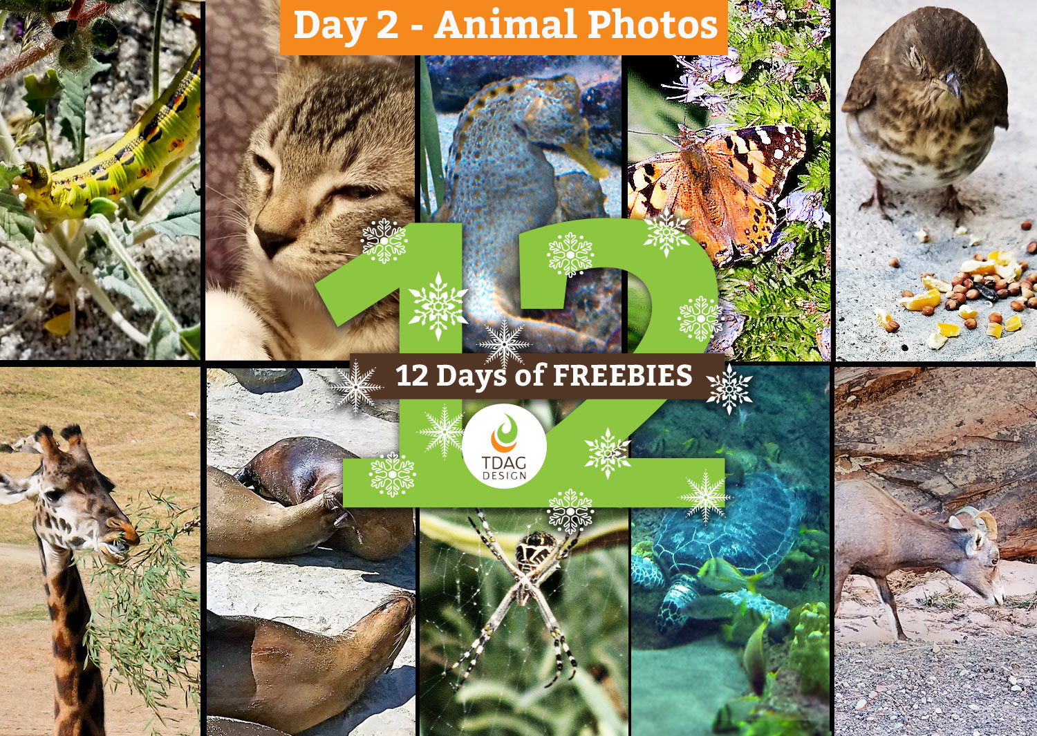 12 days pf freebies cover image: day 2