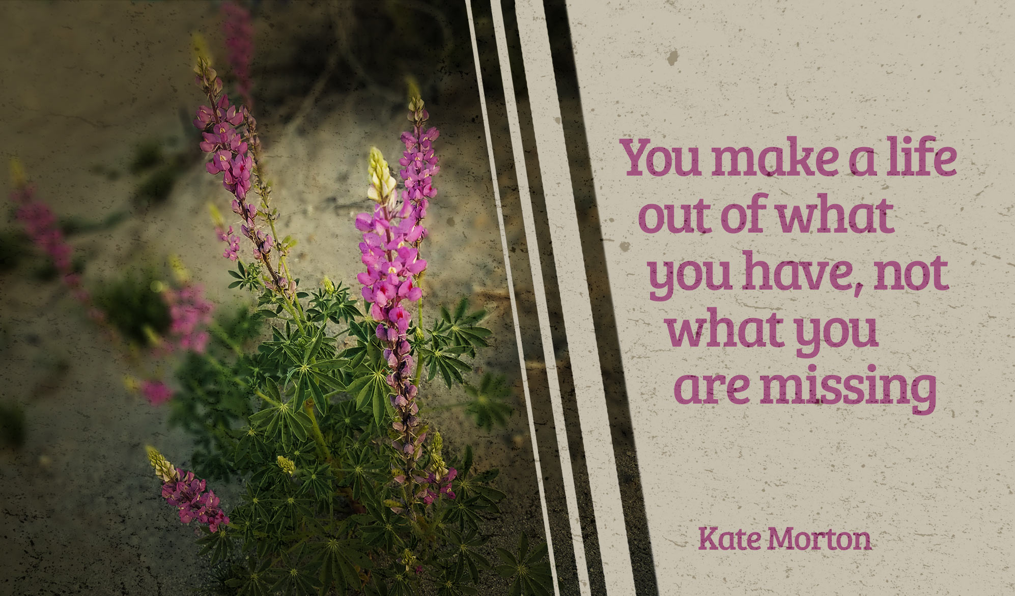 daily inspirational quote image: a purple wildflower growing out of desert sand