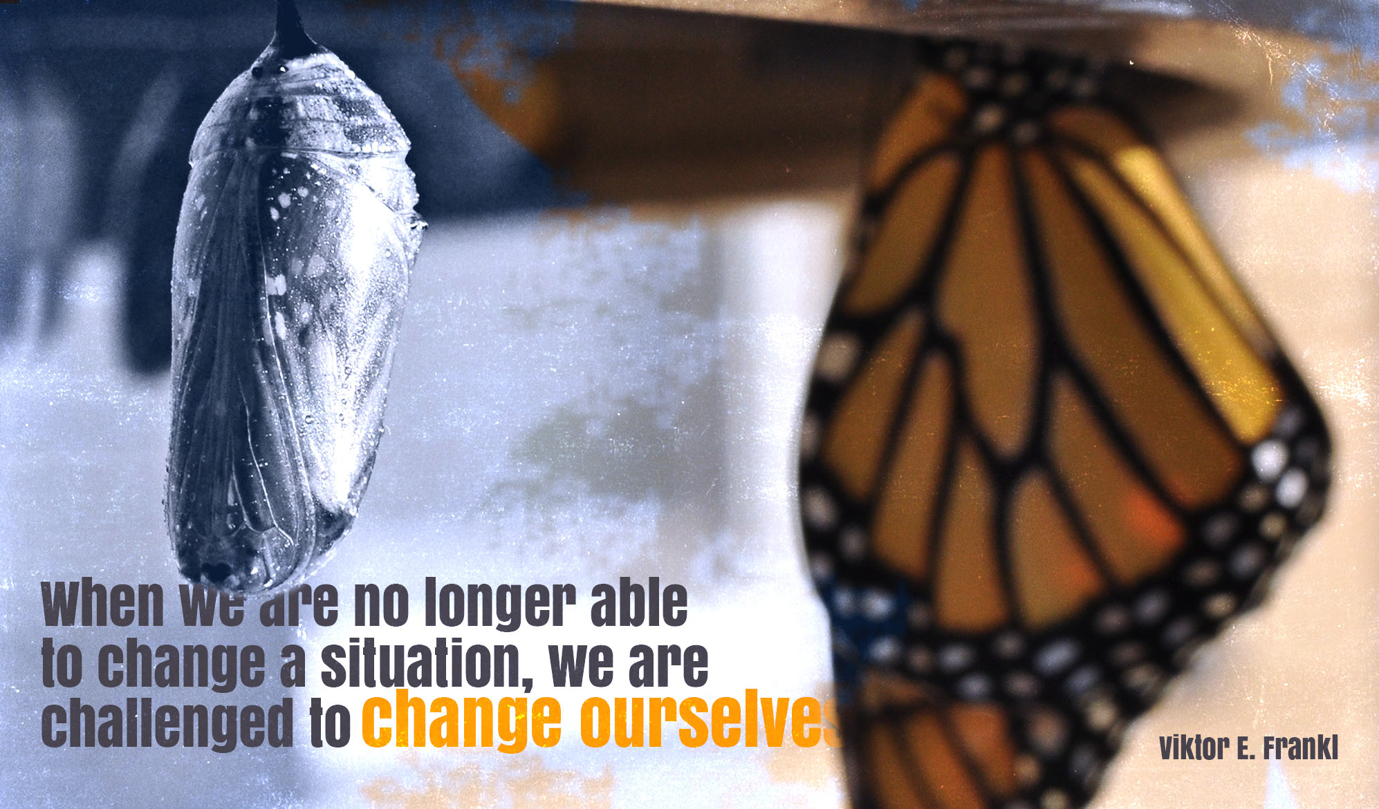 daily inspirational quote image: a chrysalis and a butterfly side by side