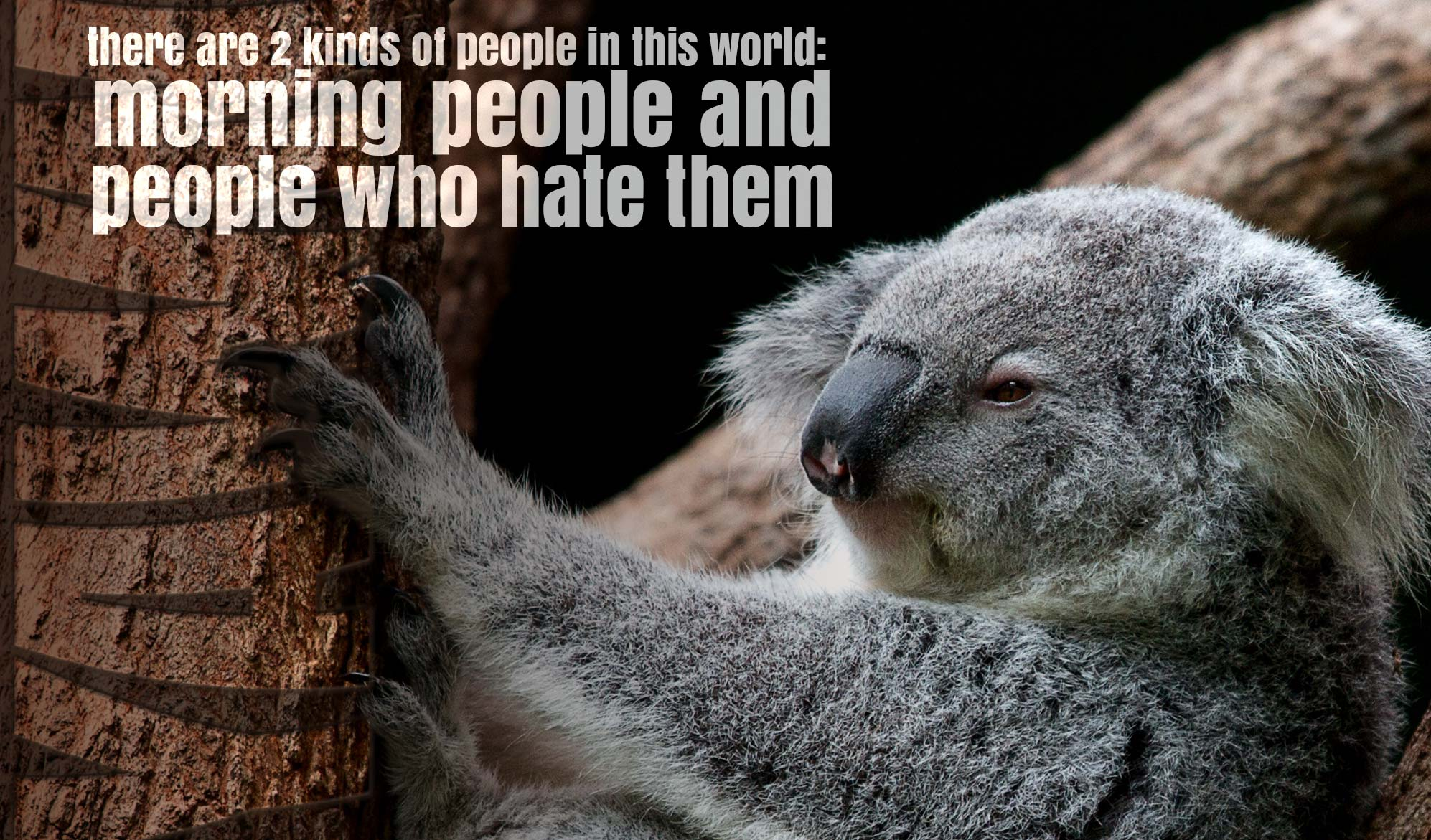 daily inspirational quote image: a koala half asleep on a tree