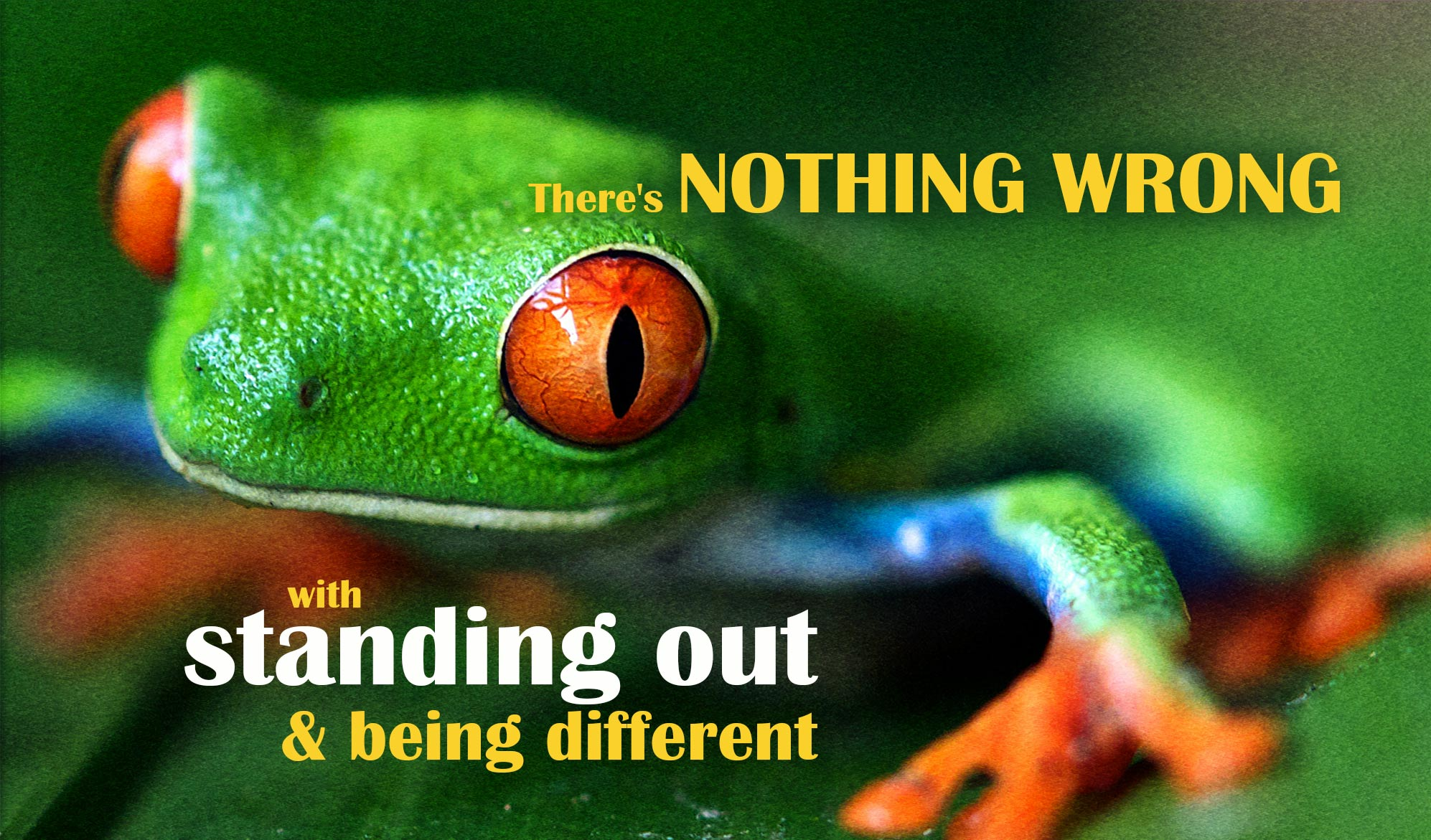 daily inspirational quote image: tropical frog with red eyes on a leaf