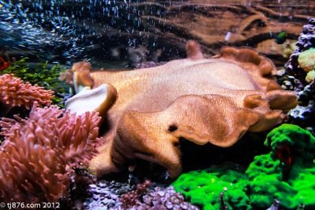 Long Beach Aquarium (11)