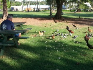 The birds at Kalapaki Beach.