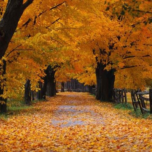 Windows XP Desktop Wallpaper: ‡Œ‹Autumn.