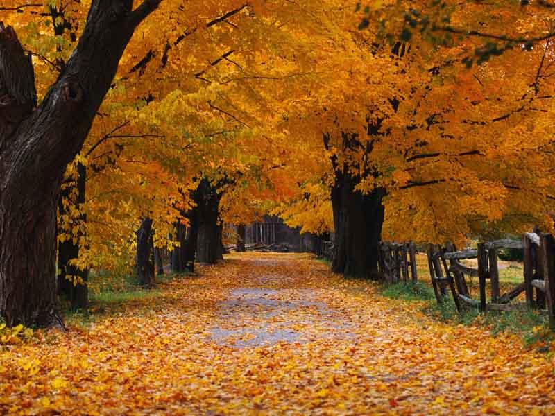 Windows XP Desktop Background: ‡Œ‹Autumn.