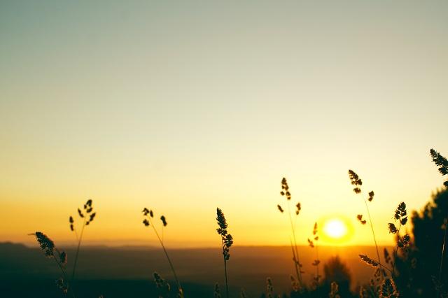 Late evening sun glow