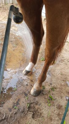 Blaze swollen leg1