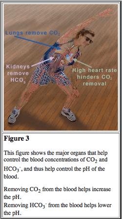 Hvorfor pH-dietter og natronkurer ikke virker (2/2)