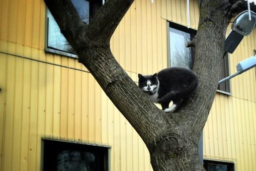 Gemuteerde katten