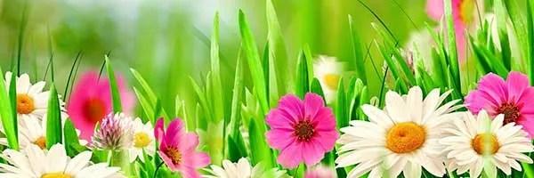 Tjooze voorjaar