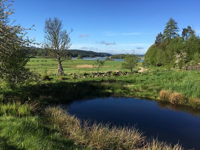 Dammen i botten av skogsträdgården Ravinen