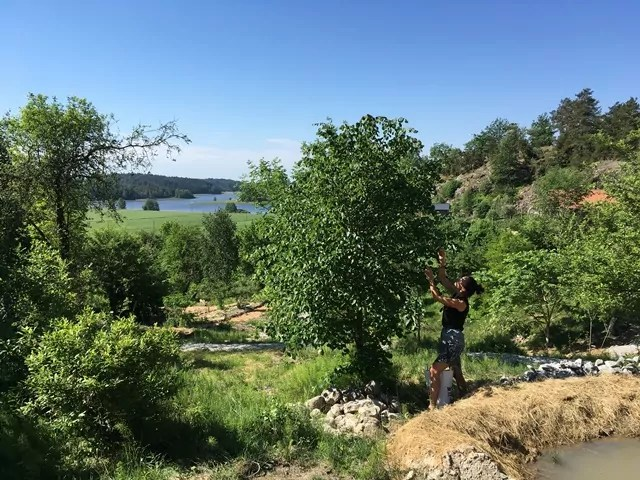Trädbeskärning i skogsträdgården Ravinen