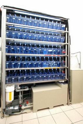 設計施工及服務 - 邰港科技全球實驗魚公司