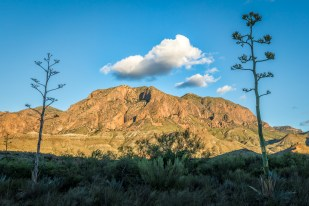 Agaves and the Chisos
