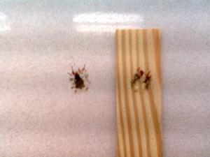 Paintstickandfly