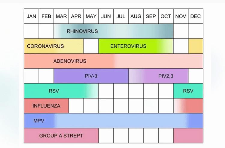 Viren-im-Jahr.png